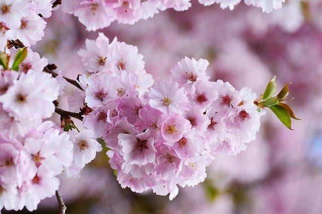typisch asiatische Pflanzen – Gehölze